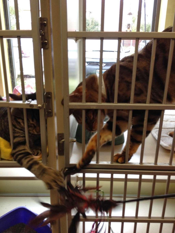 Lake Olympia Animal Hospital - veterinary care  | Photo 10 of 10 | Address: 20413 University Blvd, Missouri City, TX 77459, USA | Phone: (281) 499-7242