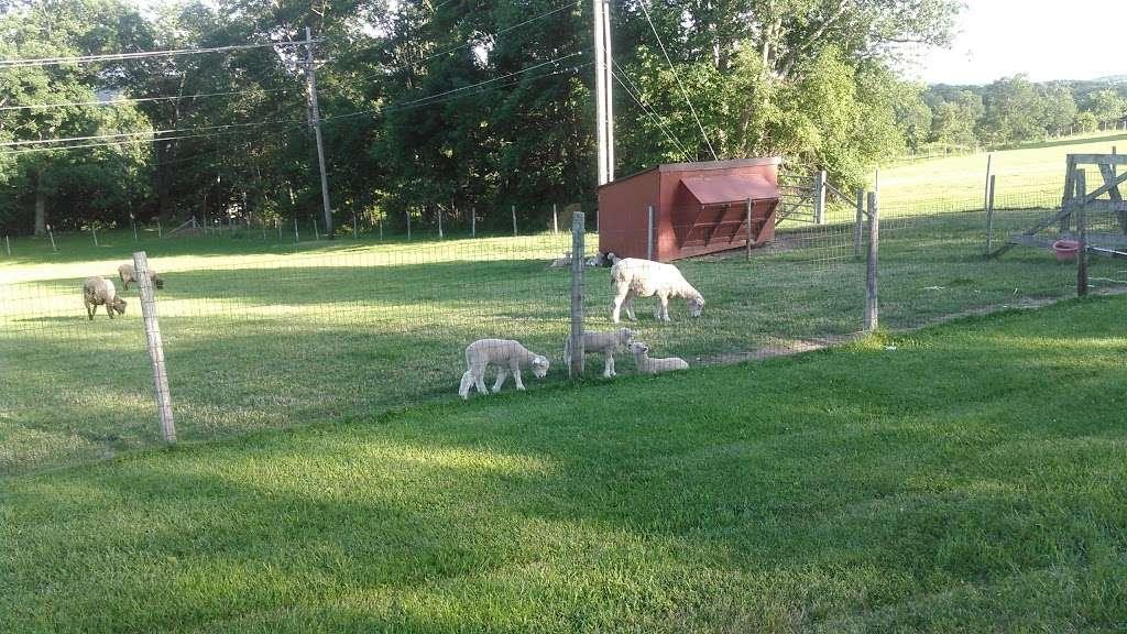 Pleasant Acres Farm Campground - campground  | Photo 8 of 10 | Address: 61 Dewitt Rd, Sussex, NJ 07461, USA | Phone: (973) 875-4166