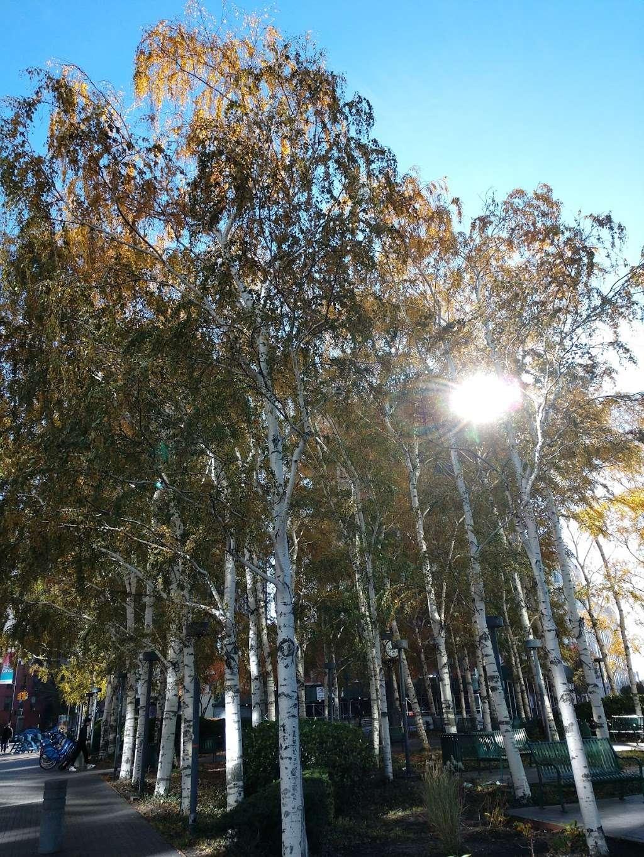 Rafferty Triangle - park  | Photo 10 of 10 | Address: 44th Dr. &, Hunter St, Long Island City, NY 11101, USA