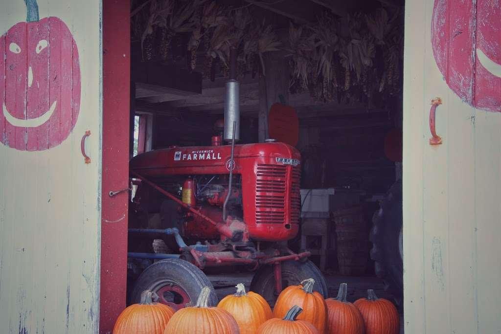 Grizzy's Pumpkins - store    Photo 10 of 10   Address: Marengo, IL 60152, USA