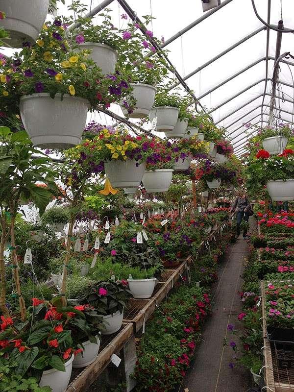 Hueters Greenhouse - store  | Photo 3 of 9 | Address: 3465 Deininger Rd, York, PA 17406, USA | Phone: (717) 755-5629