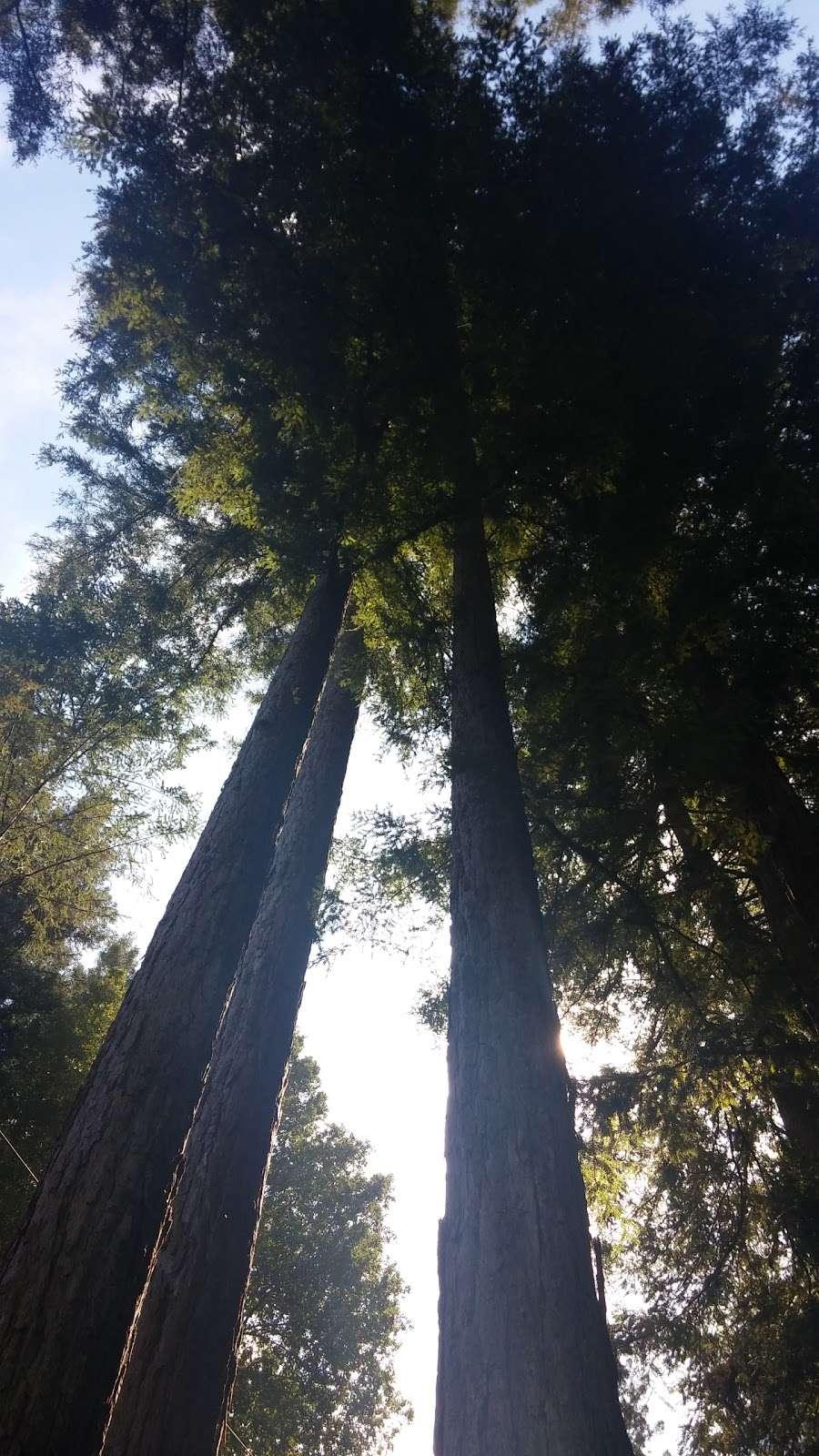 Forest Springs Improvement & Maintenance - park  | Photo 5 of 5 | Address: 401 Acorn Dr, Boulder Creek, CA 95006, USA | Phone: (831) 338-7134