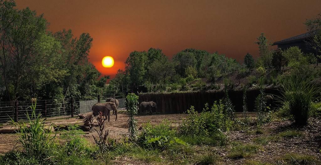 Elephant Amphitheater - zoo    Photo 10 of 10   Address: 3901-, 3999 S River Dr, Omaha, NE 68108, USA   Phone: (402) 733-8400