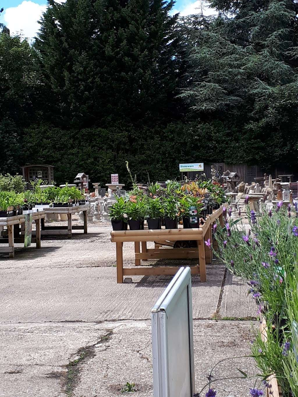 Buckland Nurseries Garden Centre - store  | Photo 8 of 10 | Address: Reigate Rd, Reigate, Betchworth RH2 9RE, UK | Phone: 01737 242990