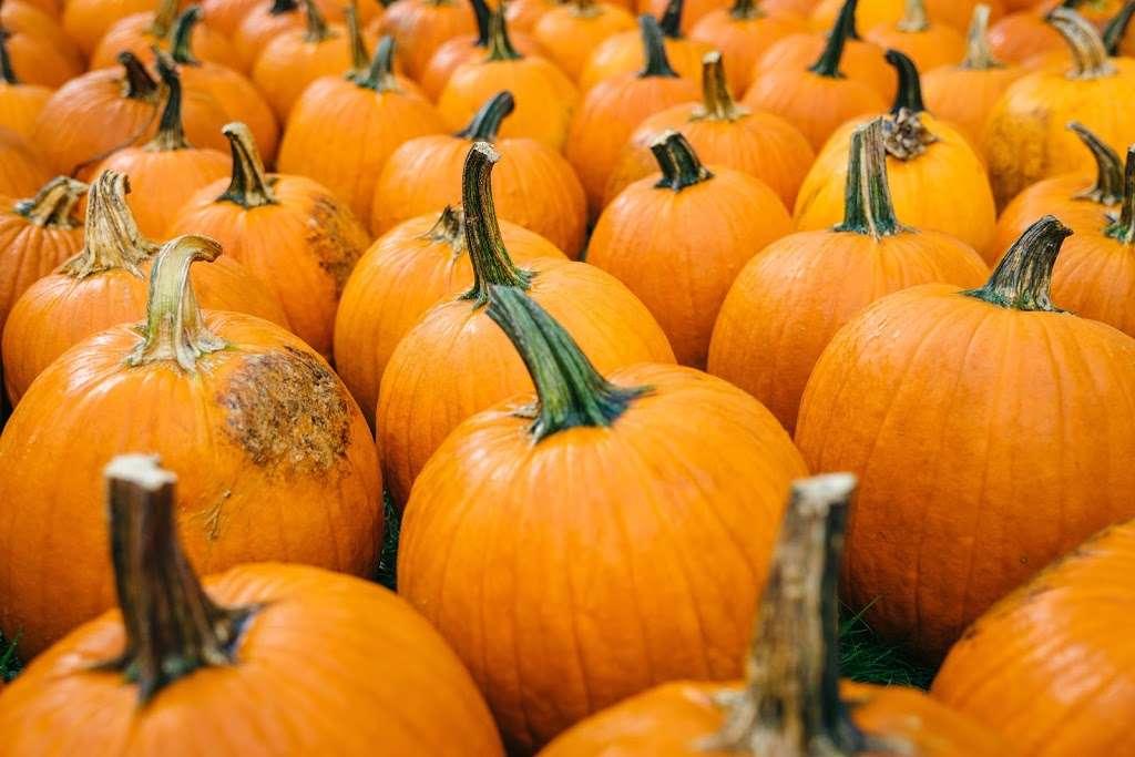 Grizzy's Pumpkins - store    Photo 4 of 10   Address: Marengo, IL 60152, USA
