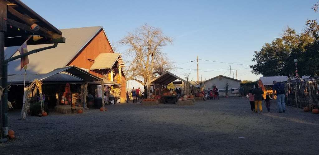 Silveyville Christmas Tree and Pumpkin Farm - store  | Photo 4 of 9 | Address: 6248 Silveyville Rd, Dixon, CA 95620, USA | Phone: (707) 678-1823