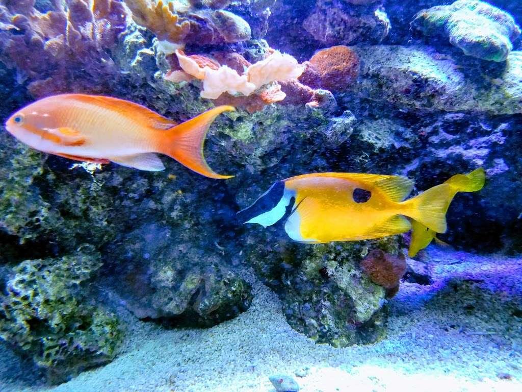 San Antonio Aquarium - aquarium  | Photo 3 of 10 | Address: 6320 Bandera Rd, Leon Valley, TX 78238, USA | Phone: (210) 310-3210