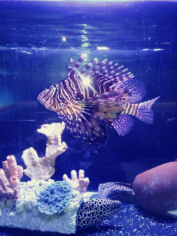 San Antonio Aquarium - aquarium  | Photo 4 of 10 | Address: 6320 Bandera Rd, Leon Valley, TX 78238, USA | Phone: (210) 310-3210