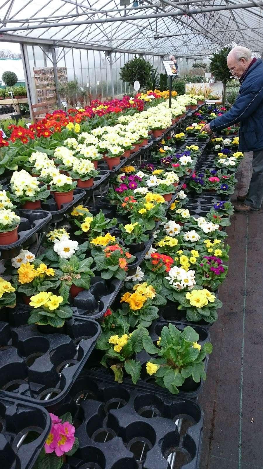 Matthews Plants - store  | Photo 3 of 10 | Address: Hadley Nursery, Tylers Rd, Roydon, Harlow CM19 5LJ, UK | Phone: 01279 793539