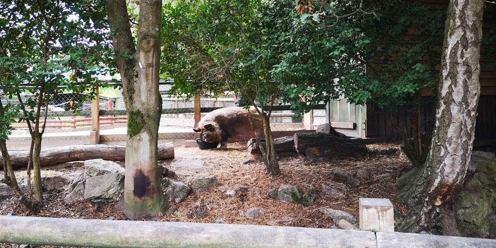 Yohoo and Friends - zoo  | Photo 1 of 4 | Address: Chessington Rd, Chessington, Epsom KT9 2NX, UK