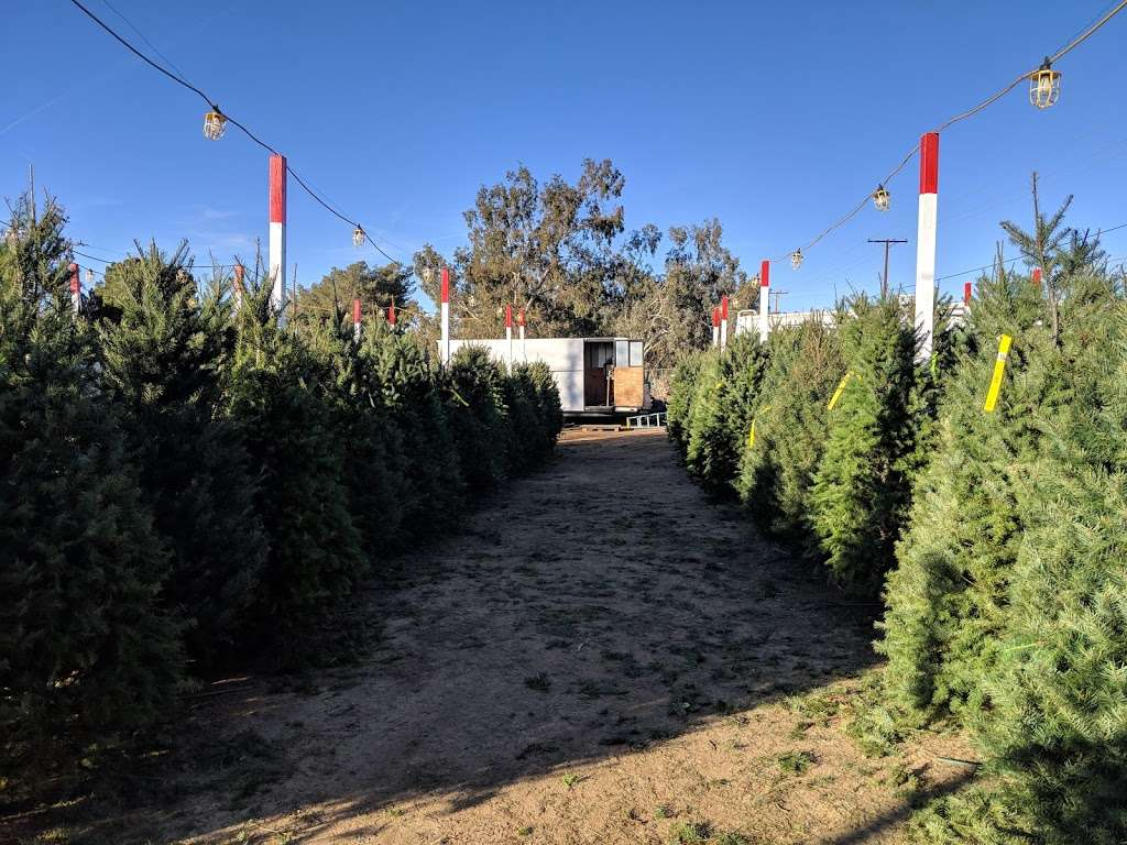 Bruces Christmas Trees - home goods store  | Photo 3 of 5 | Address: 5008 W Ave L, Lancaster, CA 93536, USA