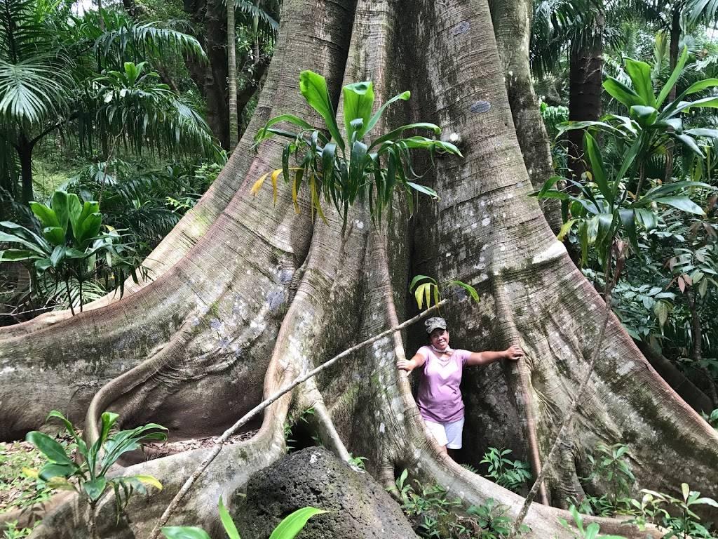 Lyon Arboretum - park    Photo 9 of 9   Address: 3860 Manoa Rd, Honolulu, HI 96822, USA   Phone: (808) 988-0456