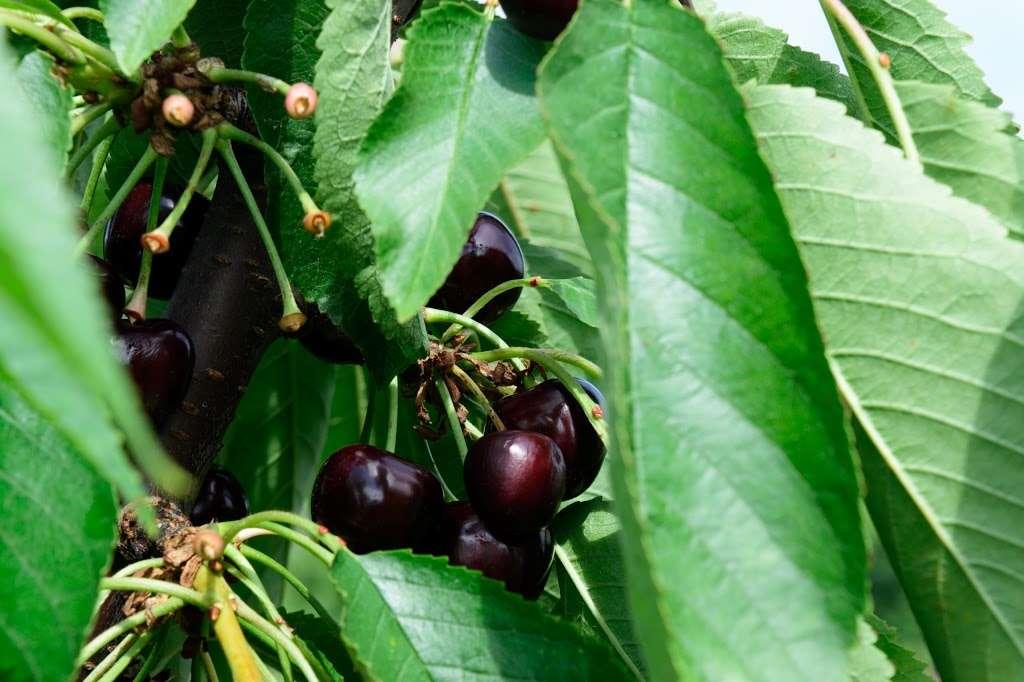 Fruitwood Farms, Inc. - store  | Photo 10 of 10 | Address: 419 Elk Rd, Monroeville, NJ 08343, USA | Phone: (856) 881-7748