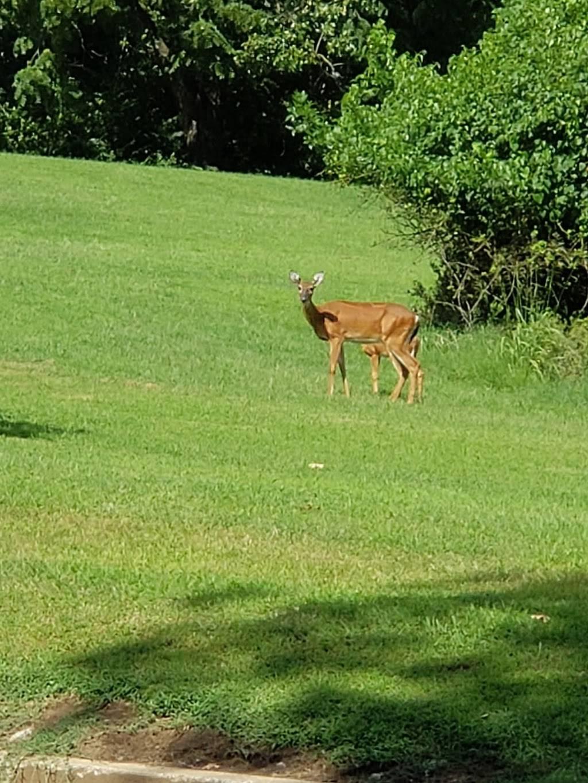Jefferson Barracks Park - park  | Photo 3 of 10 | Address: 345 North Rd W, St. Louis, MO 63125, USA | Phone: (314) 615-8800