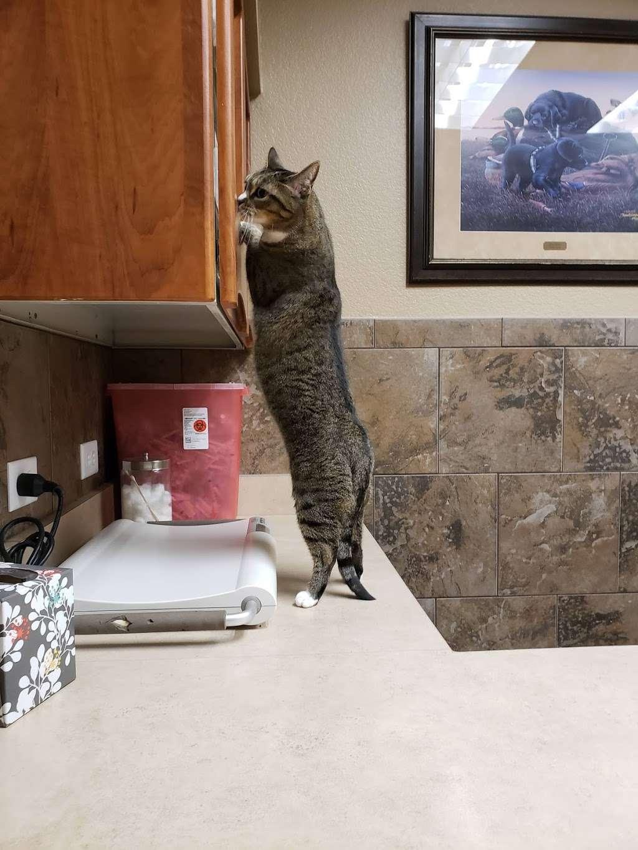 DeZavala-Shavano Veterinary Clinic - veterinary care  | Photo 5 of 10 | Address: 4408 Lockhill Selma Rd, San Antonio, TX 78249, USA | Phone: (210) 699-3939