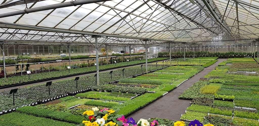 Matthews Plants - store  | Photo 10 of 10 | Address: Hadley Nursery, Tylers Rd, Roydon, Harlow CM19 5LJ, UK | Phone: 01279 793539