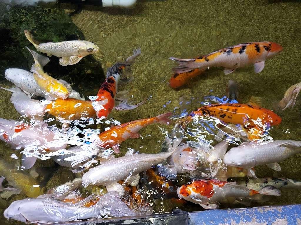 San Antonio Aquarium - aquarium  | Photo 5 of 10 | Address: 6320 Bandera Rd, Leon Valley, TX 78238, USA | Phone: (210) 310-3210