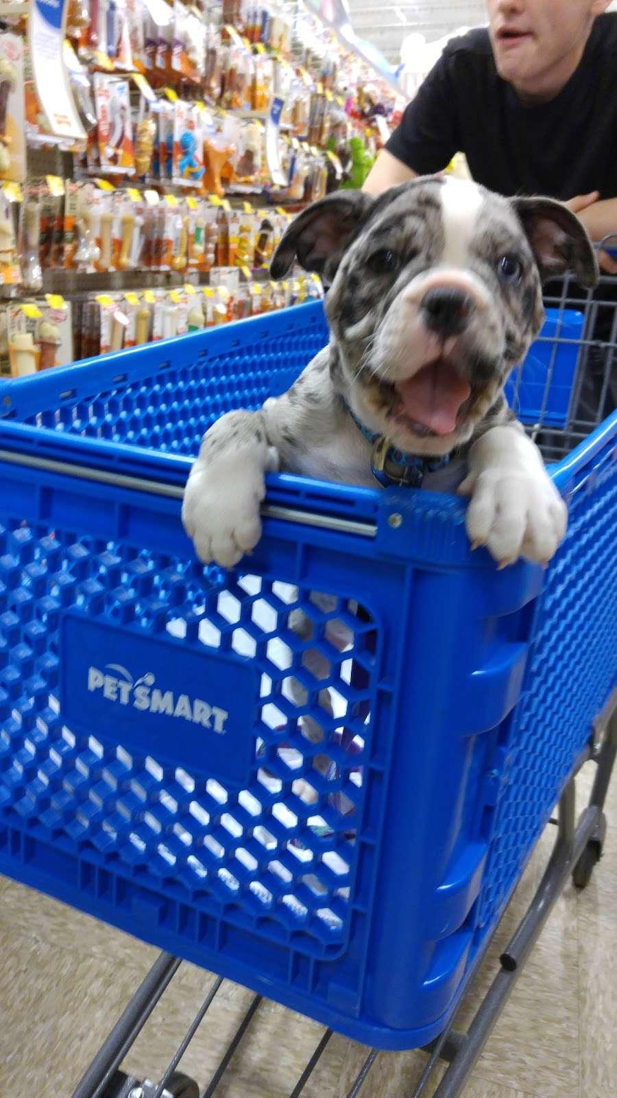 Petsmart Store 534 North Us 441 Lady Lake Fl 32159 Usa