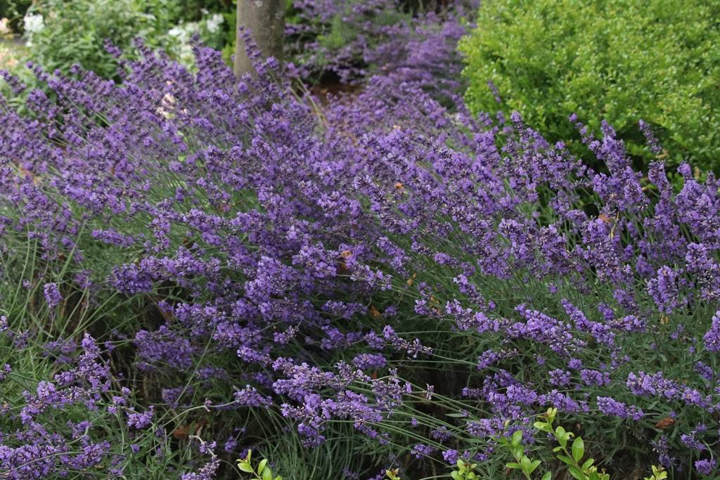 Woodland Park Rose Garden - park  | Photo 9 of 9 | Address: 750 N 50th St, Seattle, WA 98103, USA | Phone: (206) 684-4075