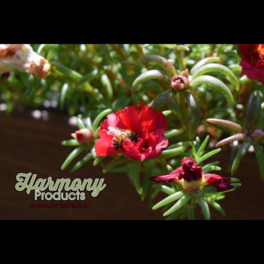 Harmony Products - home goods store    Photo 8 of 10   Address: 486 Putnam Pike, Chepachet, RI 02814, USA   Phone: (401) 949-3473