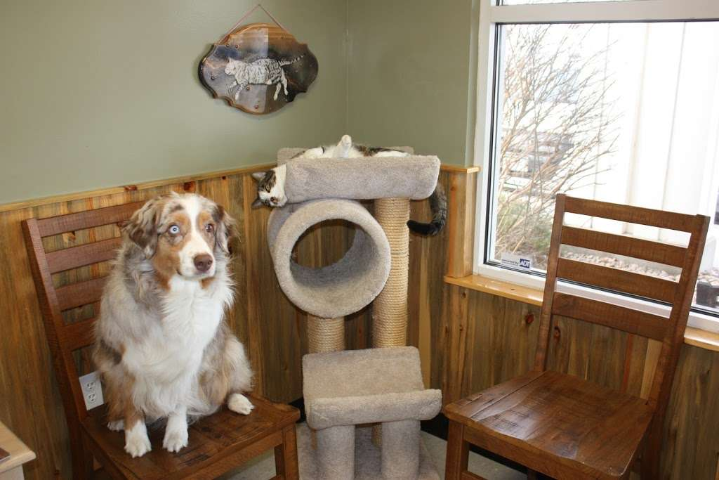 The Vets Animal Hospital - veterinary care    Photo 4 of 10   Address: 1295 Main St, Windsor, CO 80550, USA   Phone: (970) 686-5025