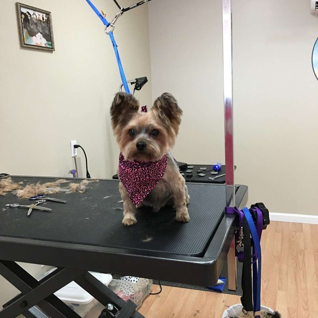 Pets Wonder Grooming - pet store  | Photo 2 of 10 | Address: 64-71 Dry Harbor Rd, Middle Village, NY 11379, USA | Phone: (718) 894-0163