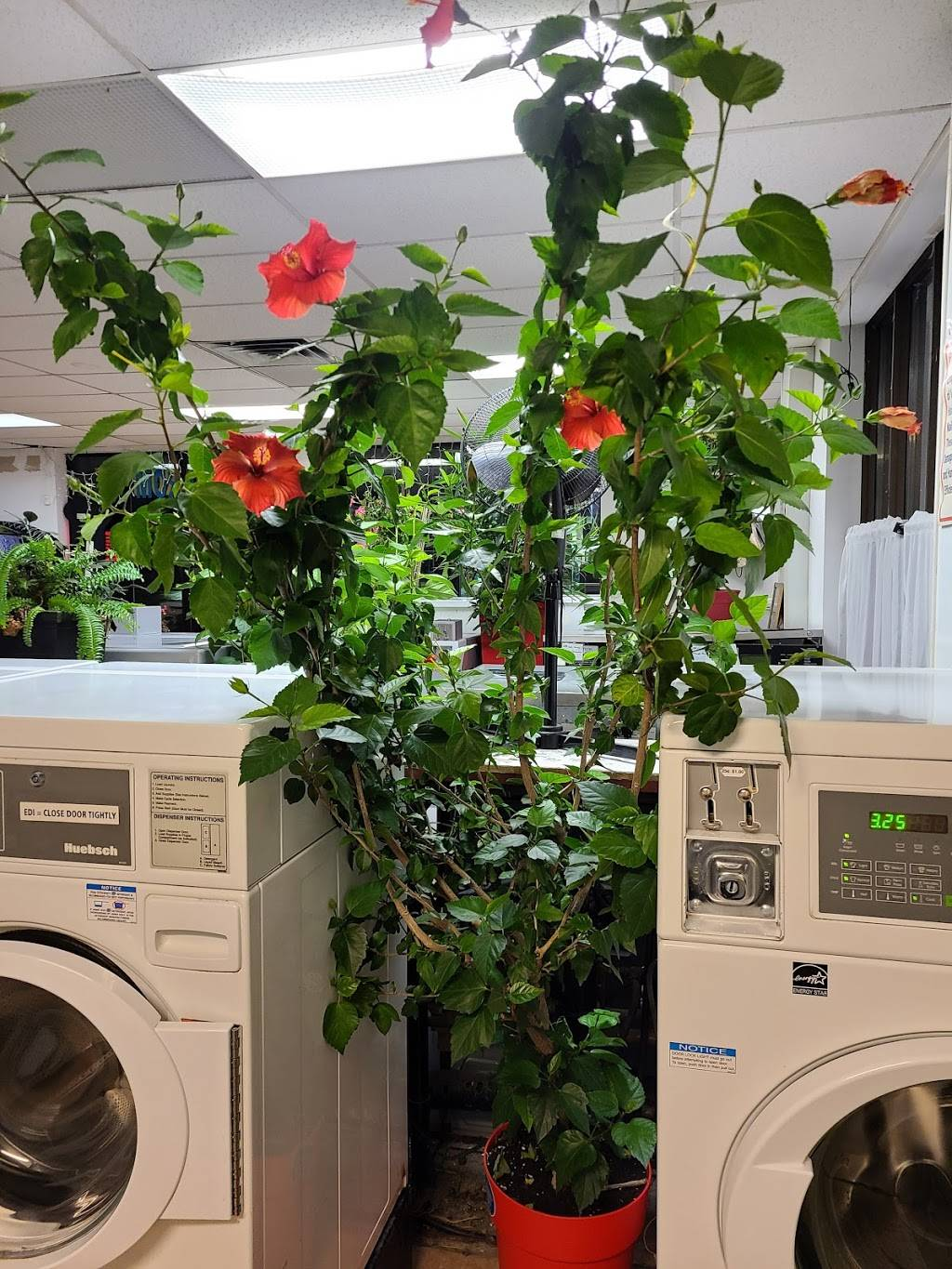 Campbell Laundry Shop - laundry  | Photo 6 of 6 | Address: 1705 College Ave, Windsor, ON N9B 1M4, Canada | Phone: (519) 258-3113