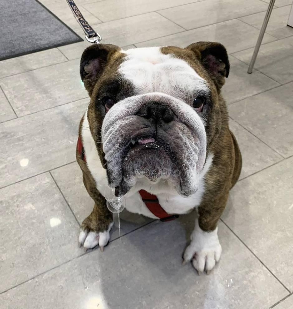 Hoboken Vets Animal Clinic - veterinary care  | Photo 10 of 10 | Address: 1160 Maxwell Ln, Hoboken, NJ 07030, USA | Phone: (201) 559-5133