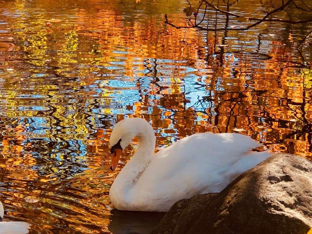 J. A. McFaul Environmental Center - park  | Photo 10 of 10 | Address: 150 Crescent Ave, Wyckoff, NJ 07481, USA | Phone: (201) 891-5571
