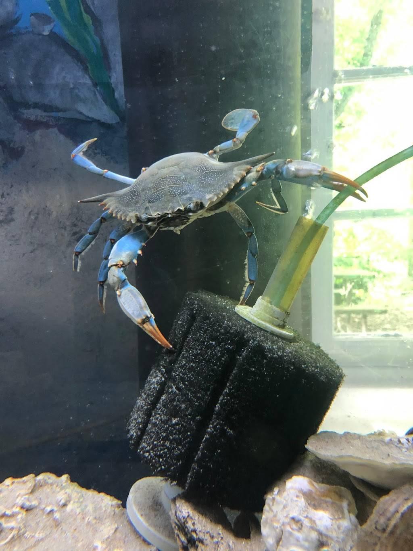 Glen Echo Park Aquarium - aquarium    Photo 7 of 9   Address: 7300 Macarthur Blvd, Glen Echo, MD 20812, USA   Phone: (301) 955-6256