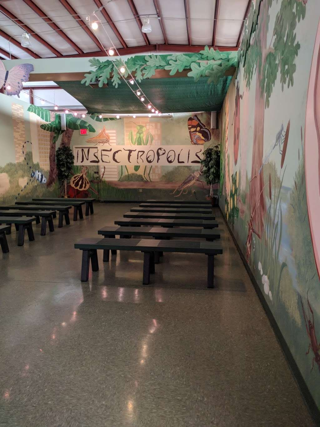 Insectropolis - museum  | Photo 8 of 10 | Address: 1761 U.S. 9, Toms River, NJ 08755, USA | Phone: (732) 349-7090
