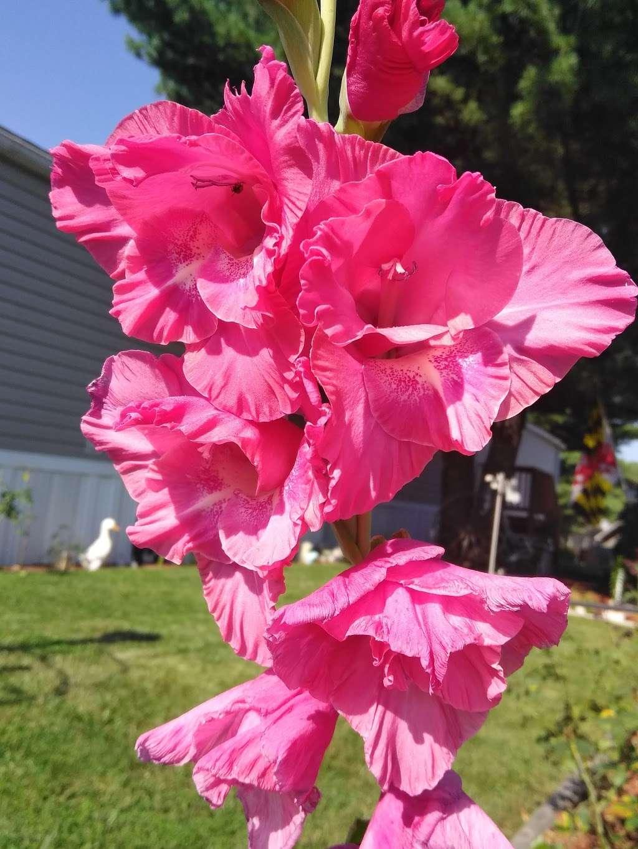 Brentwood Manor Inc - rv park  | Photo 4 of 5 | Address: 8291 Washington Blvd, Jessup, MD 20794, USA | Phone: (301) 498-0440