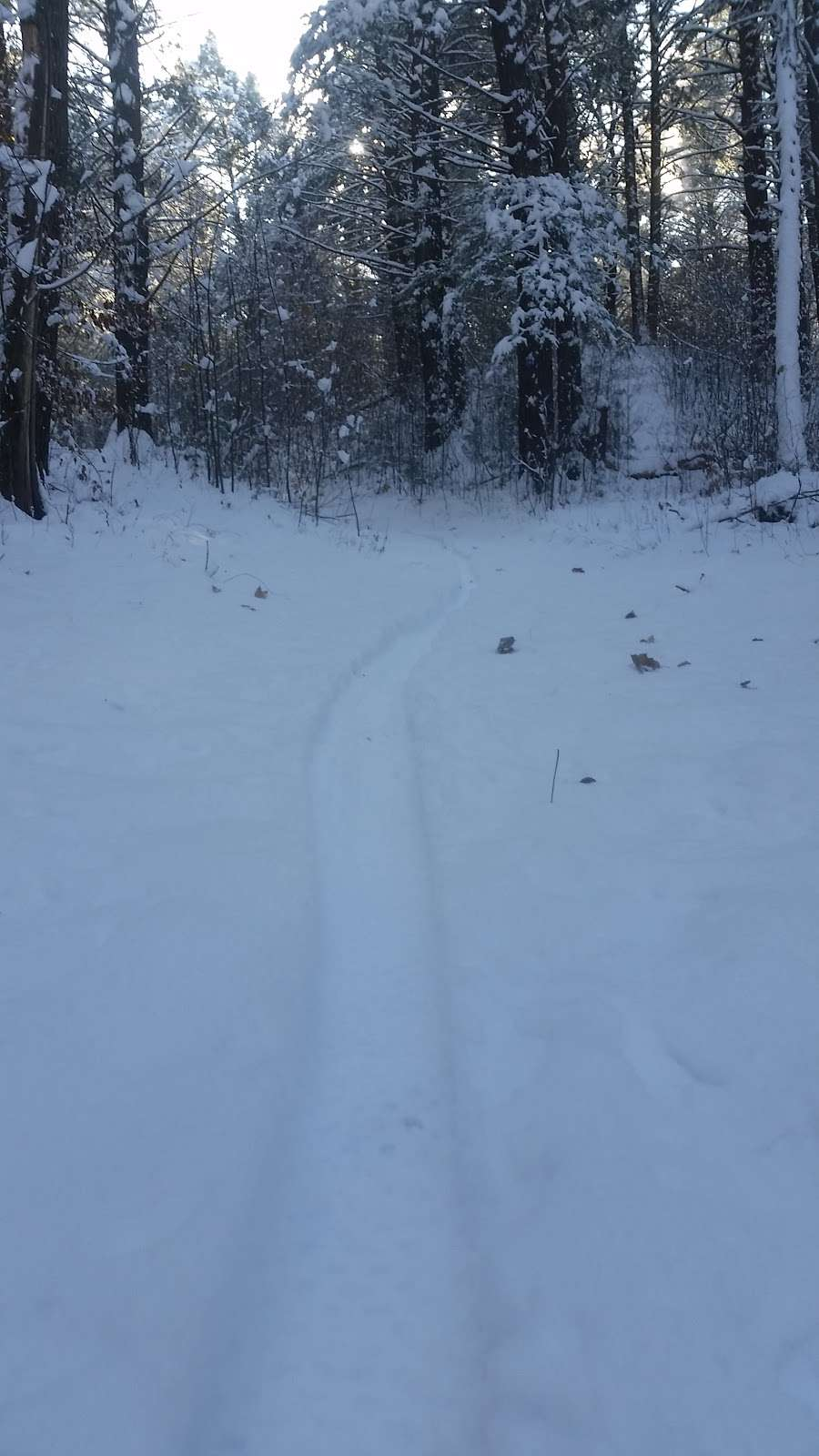 Hunnewell Forest, Oak Street Lot - park    Photo 5 of 9   Address: Main Trail, Natick, MA 01760, USA