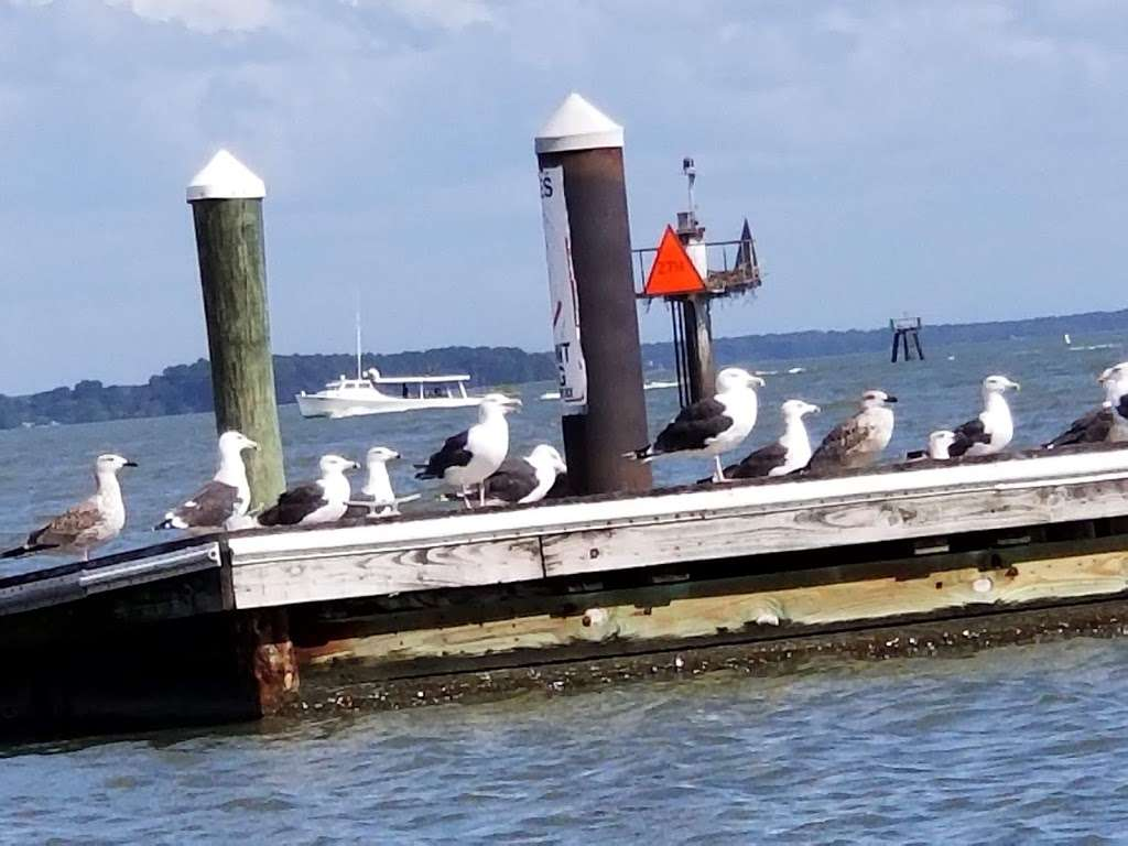 Tilghman on Chesapeake - lodging  | Photo 2 of 10 | Address: 21610 Island Club Rd, Tilghman, MD 21671, USA | Phone: (410) 886-2389