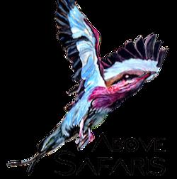 Above Safaris - travel agency  | Photo 1 of 1 | Address: 69 Clifton Pl #4F, Brooklyn, NY 11238, USA | Phone: (510) 698-9065