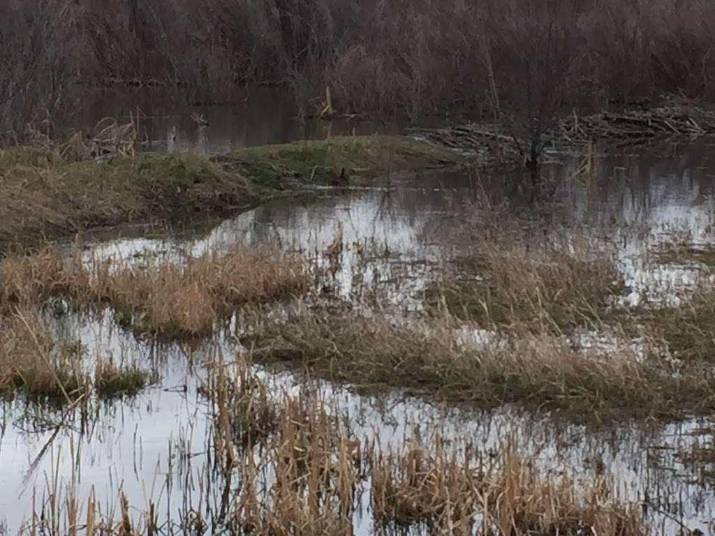 Willow Springs Beaver Ponds - museum  | Photo 3 of 3 | Address: Centennial, CO 80112, USA