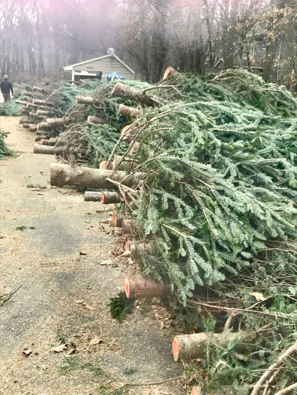 Freds Christmas Trees - lodging  | Photo 1 of 2 | Address: 875 Grove St, Montclair, NJ 07043, USA