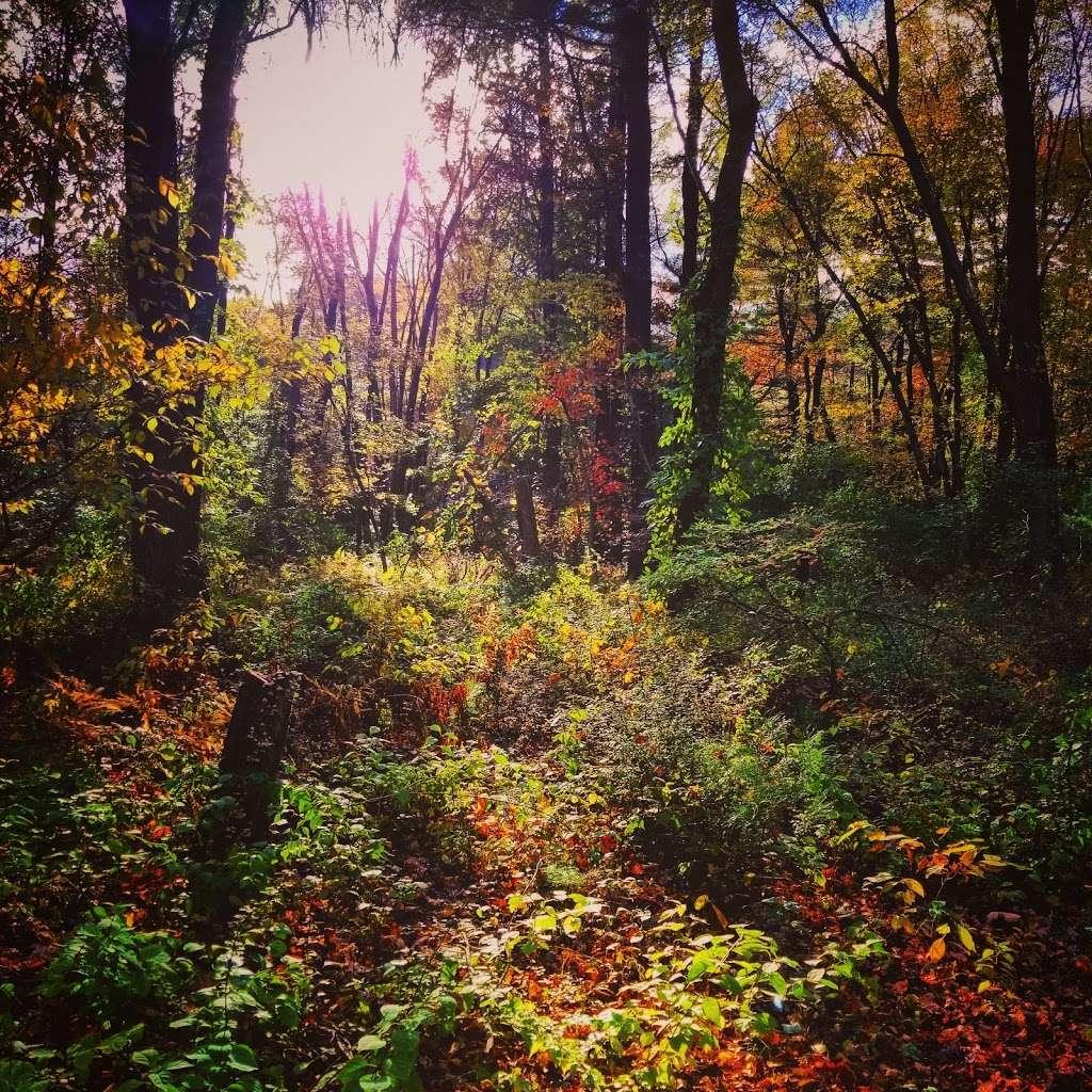 Second field - park  | Photo 3 of 5 | Address: Bellingham, MA 02019, USA