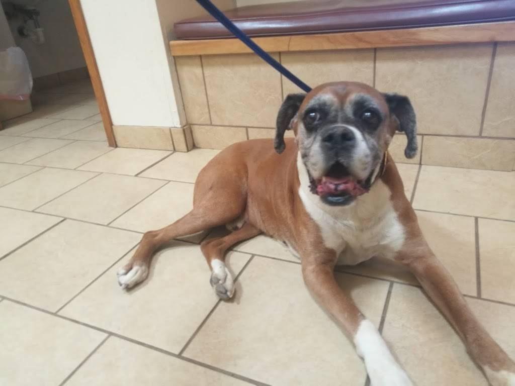 Canyon Crossroads Animal Hospital - veterinary care    Photo 3 of 7   Address: 11804 NM-337, Tijeras, NM 87059, USA   Phone: (505) 281-2378