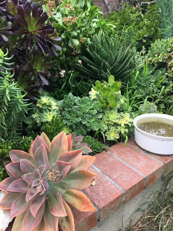 Succulent Garden Art - park  | Photo 3 of 10 | Address: 6701 E 9th St, Long Beach, CA 90815, USA | Phone: (951) 450-9344