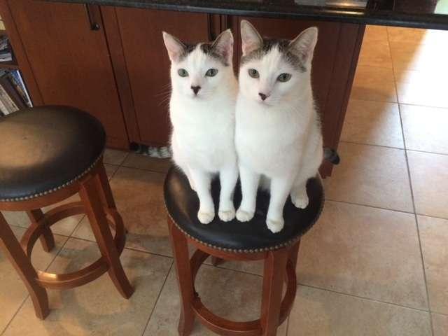 Catnip and Carrots - veterinary care  | Photo 7 of 10 | Address: 2056 Jericho Turnpike, New Hyde Park, NY 11040, USA | Phone: (516) 877-7080