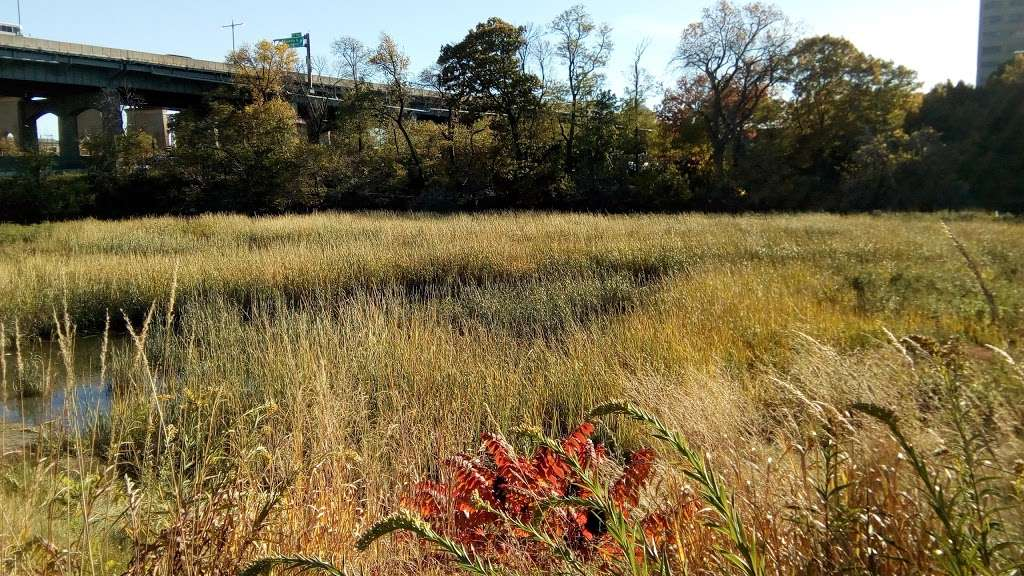 Little Hell Gate Salt Marsh - park  | Photo 1 of 10 | Address: New York, NY 10035, USA | Phone: (212) 860-1899