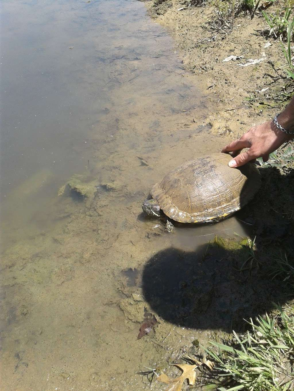 Fox Creek Greenbelt Park - park  | Photo 5 of 9 | Address: Lewisville, TX 75067, USA