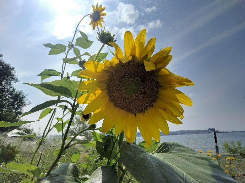 Narrows Botanical Gardens - park  | Photo 8 of 10 | Address: 464 Bay Ridge Ave, Brooklyn, NY 11220, USA | Phone: (718) 748-4810