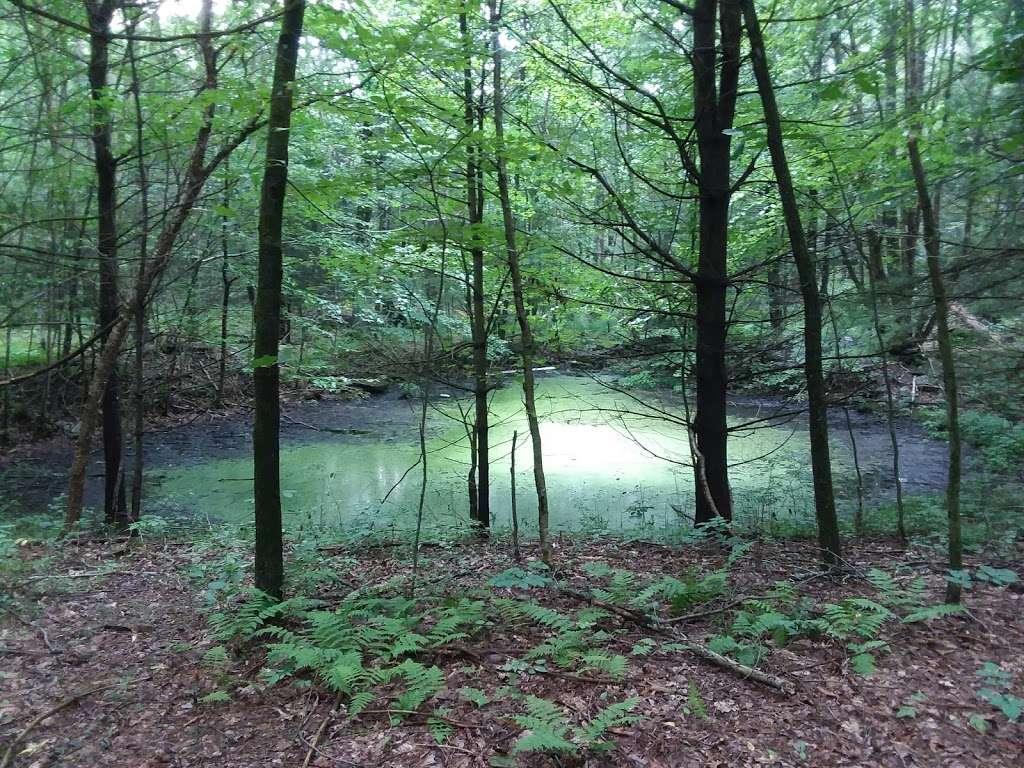 Moon Lake State Forest Recreation Area - park  | Photo 1 of 10 | Address: Hunlock Creek, PA 18621, USA