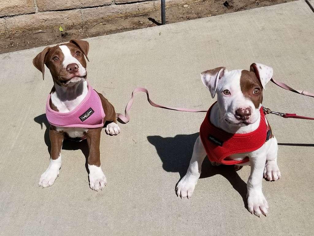 Five Star Veterinary Center - veterinary care  | Photo 1 of 8 | Address: 13725 Foothill Blvd, Sylmar, CA 91342, USA | Phone: (818) 362-6599