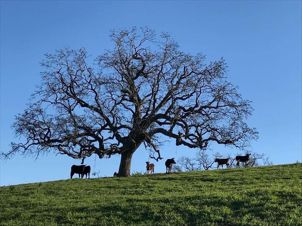 Whiteface Mountain Trailhead - park    Photo 2 of 10   Address: 619016002, Simi Valley, CA 93065, USA