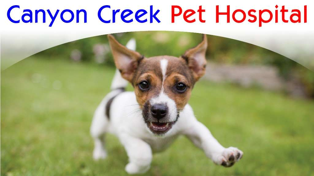 Canyon Creek Pet Hospital - pharmacy  | Photo 1 of 6 | Address: 5617 Silver Creek Valley Rd, San Jose, CA 95138, USA | Phone: (408) 809-0887