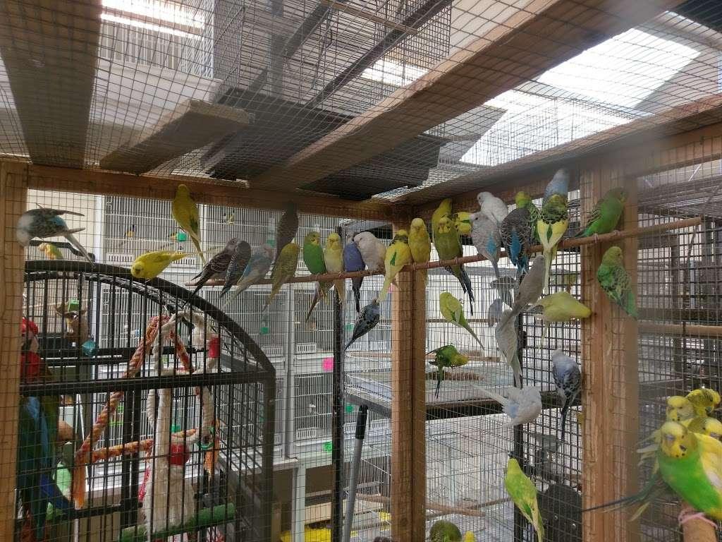 The Enfield Bird Centre bird cages - pet store  | Photo 1 of 10 | Address: Cattlegate Rd, Enfield EN2 9DS, UK | Phone: 020 8367 9223