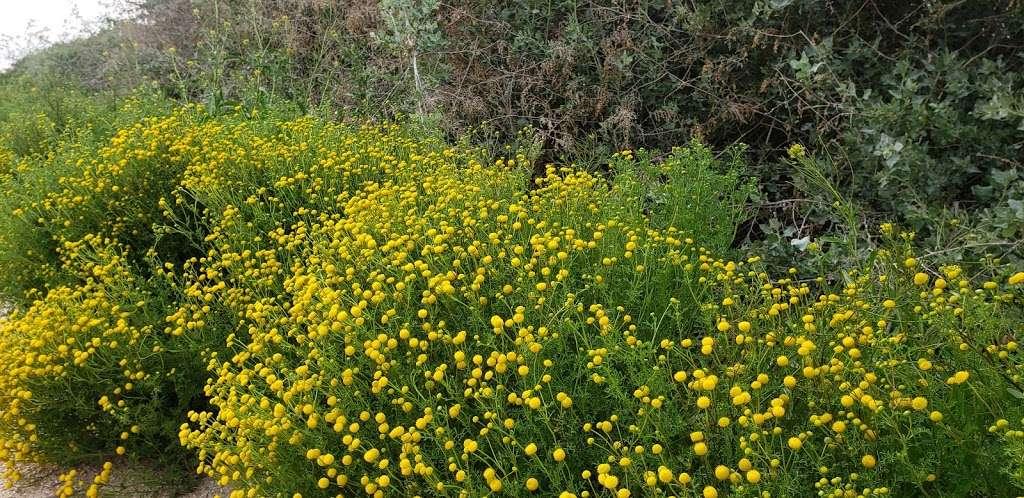 Tres Rios Wetlands Hayfield Site - park  | Photo 7 of 10 | Address: 8209 S 70th Ln, Laveen Village, AZ 85339, USA
